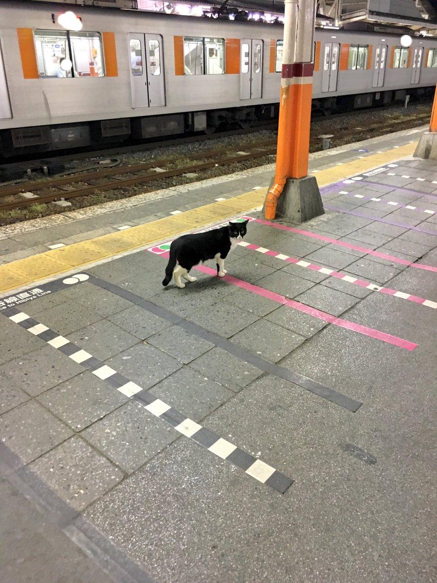 そういえば、昨日終電で帰ってきたら入れ違いに猫が改札から入ってきて電車乗ろうと?してた。もう電車ないよって声かけたらまた改札から出ていった。 pic.twitter.com/oUkzwtLQqB