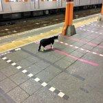 終電で帰ってきたら改札に猫がもう電車ないよと伝えたら意外と素直だった