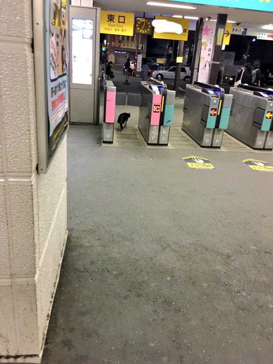 終電で帰ってきたら改札に猫がwwもう電車ないよと伝えたら意外と素直だったww