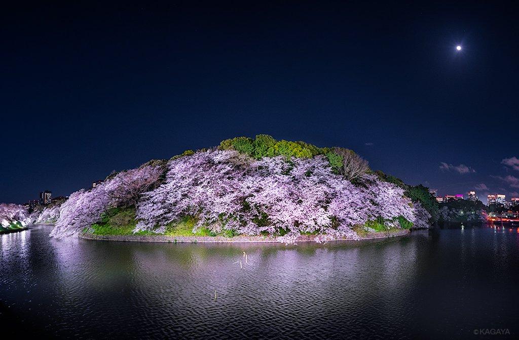 わたしの桜追っかけもそろそろ終了です。 今年もたくさんの幻想的な桜の光景に出会いました。 また来年、花の季節に。 (写真は月夜の東京千鳥ヶ淵パノラマ。4/7撮影)