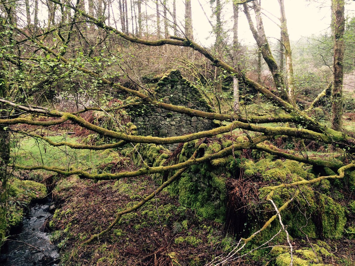 Des res in idyllic forest location close to Loch Fyne. Own water supply. In need of some modernisation.