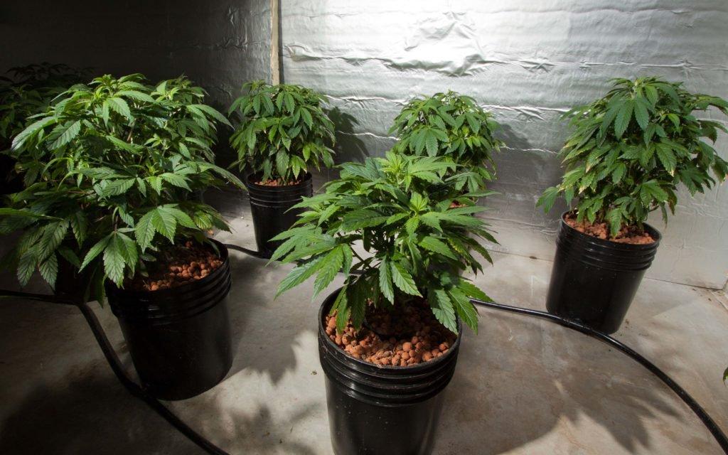 Cops Stumble into Big Marijuana Operation, Human Remains, Suicide – High Times