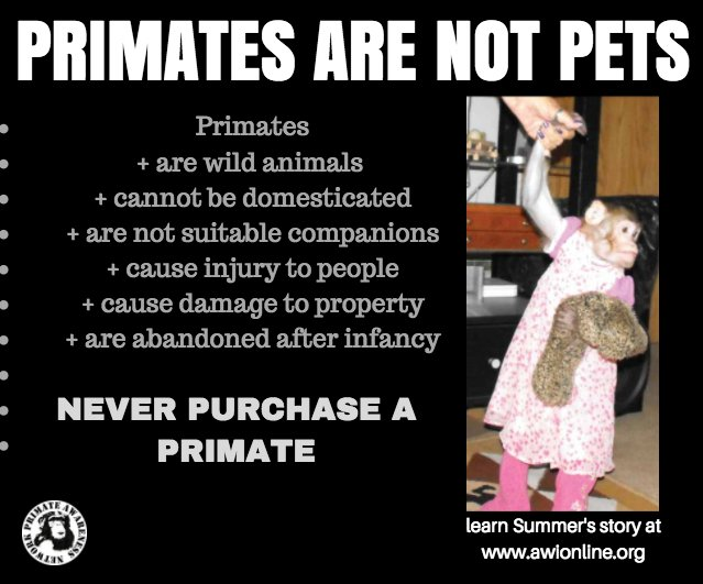 Spread the word! PRIMATES ARE NOT PETS! #NotAPet more info: junglefriends.org/monkey-topics/…