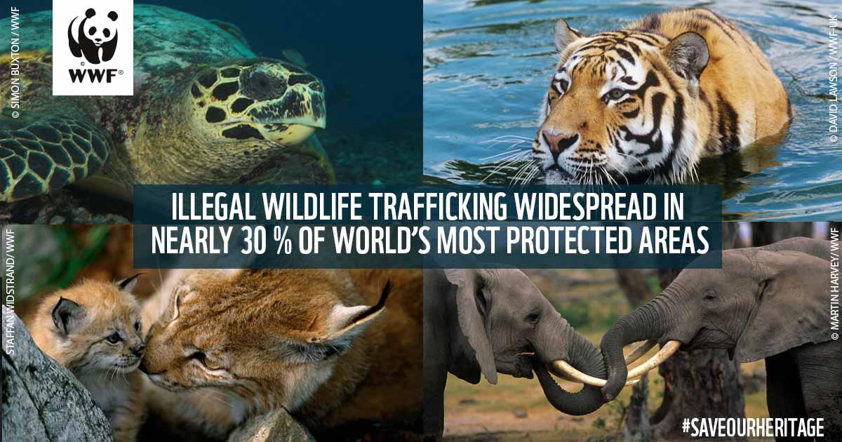 https://twitter.com/WWF/status/854172230699417600