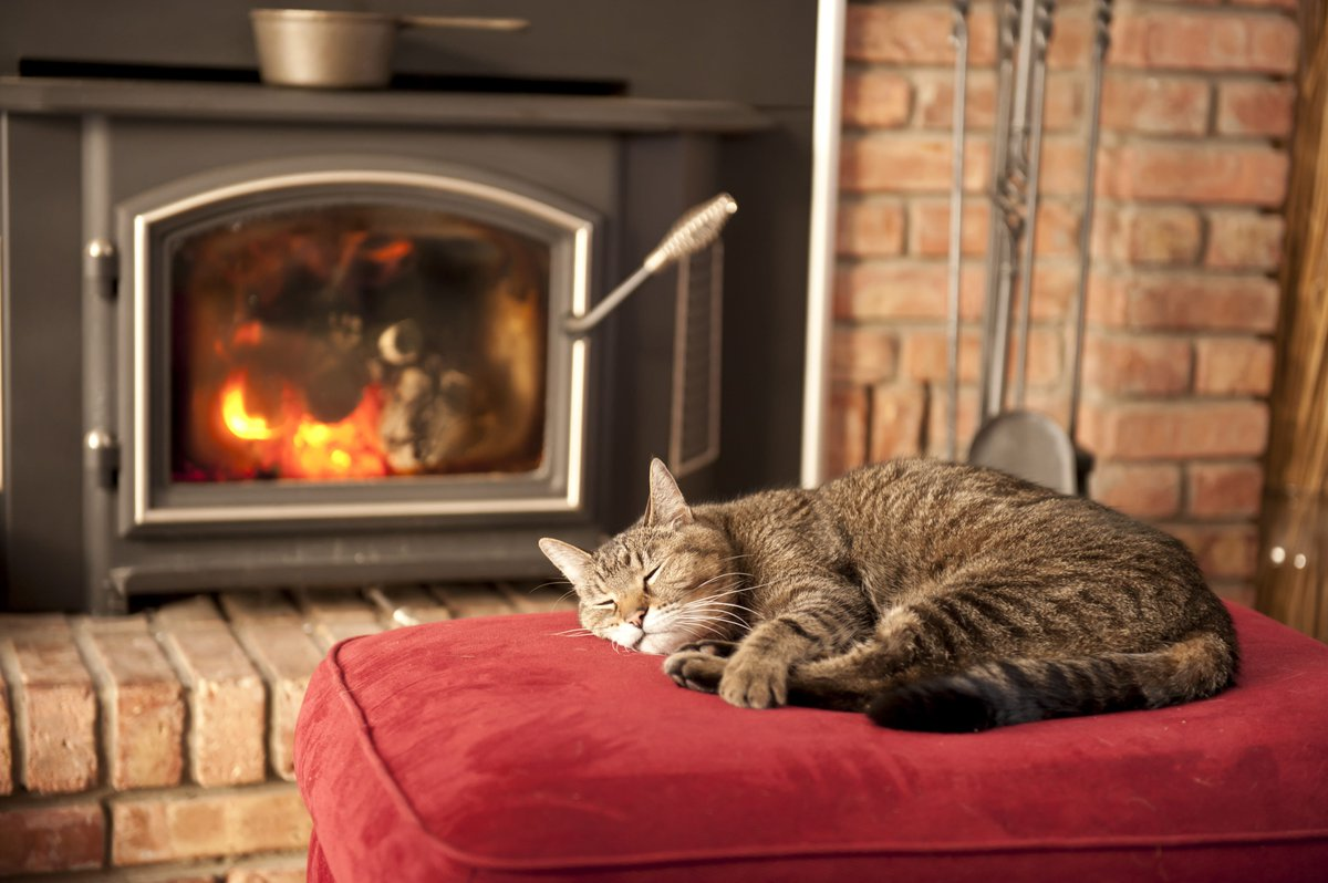 Who's got that #FridayFeeling? Entered our #comp yet? RT+Follow to #Win a #Firemizer in celebration of #NationalPetMonth! Ends 30th April<br>http://pic.twitter.com/GXwDrWQ46U