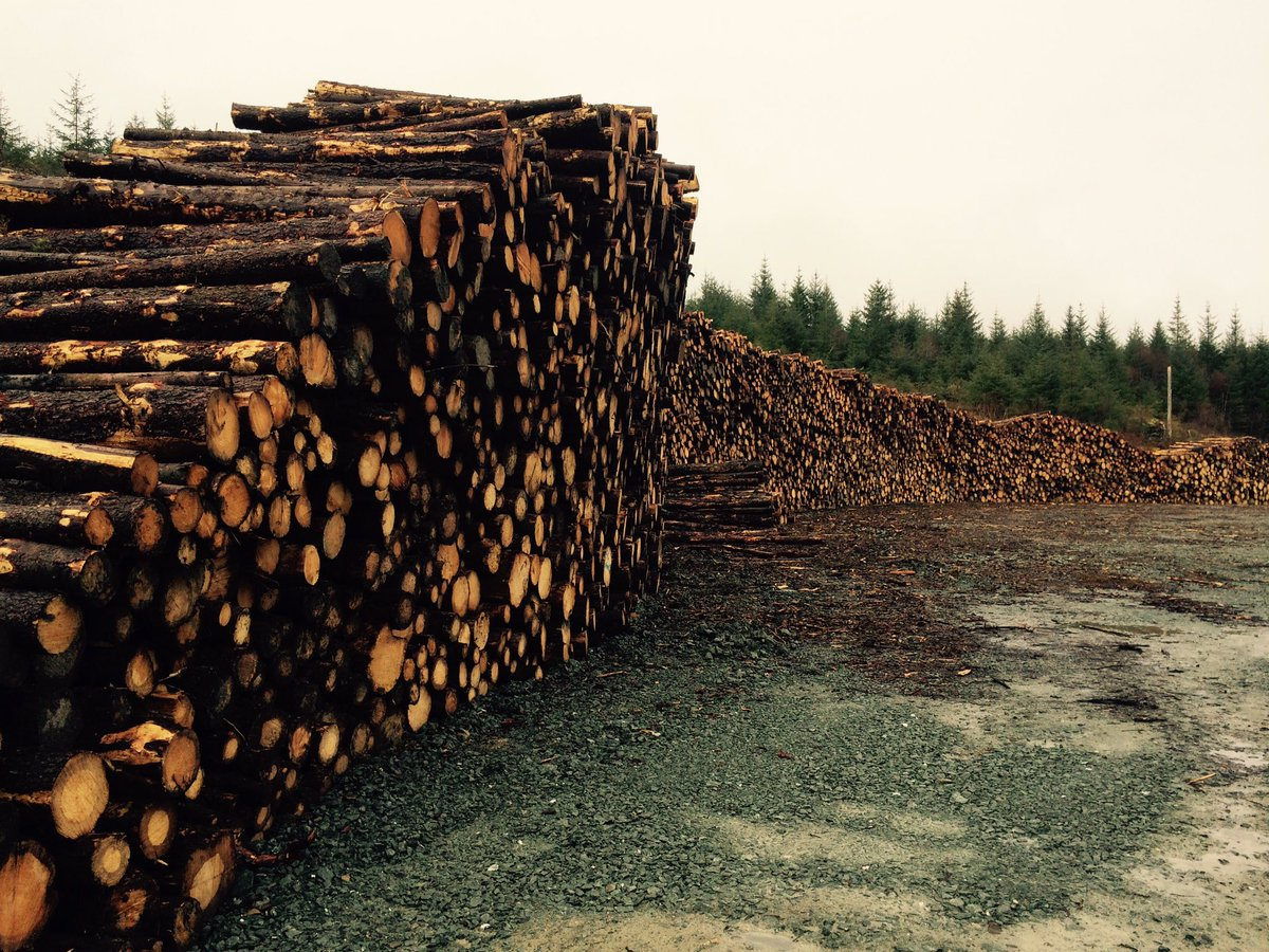 @ExploreArgyll @Argyll_IslesApp I guess so - certainly plenty of timber nearby ..