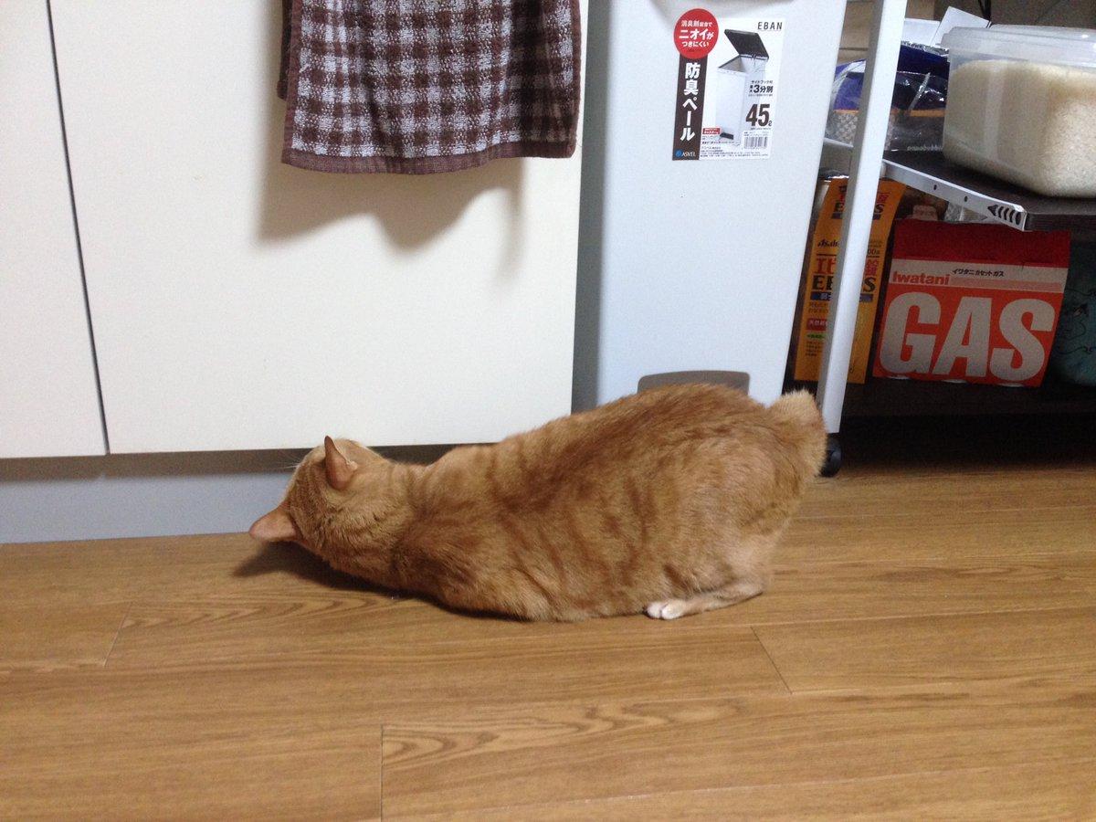 そして今朝は寒気がするから熱測ったら平熱よりかなり低いっていう…なんだこれ。 #猫 #猫好きさんと繋がりたい #cat #ねこ pic.twitter.com/zjCIAyKcc4