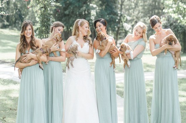 Bullies Replace Bouquets in the Best Wedding Photos Ever http://www.petguide.com/blog/dog/bullies-replace-bouquets-in-the-best-wedding-photos-ever/…