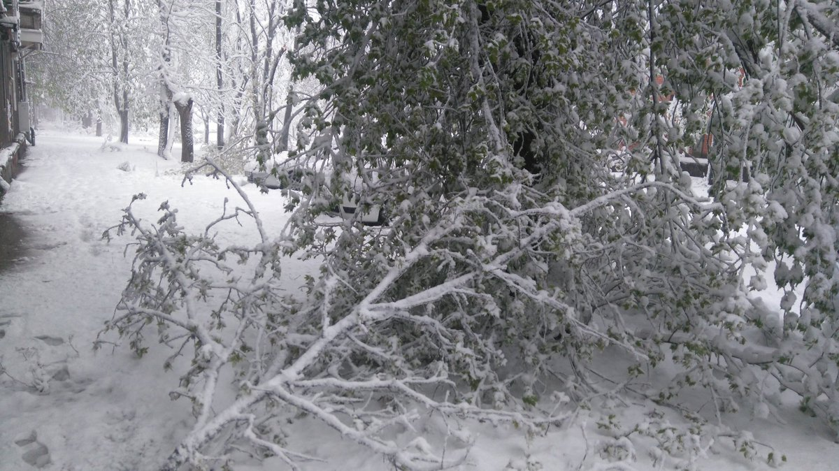 Fallen trees in Dnipro everywhere, mayor Filatov estimates number at 2600