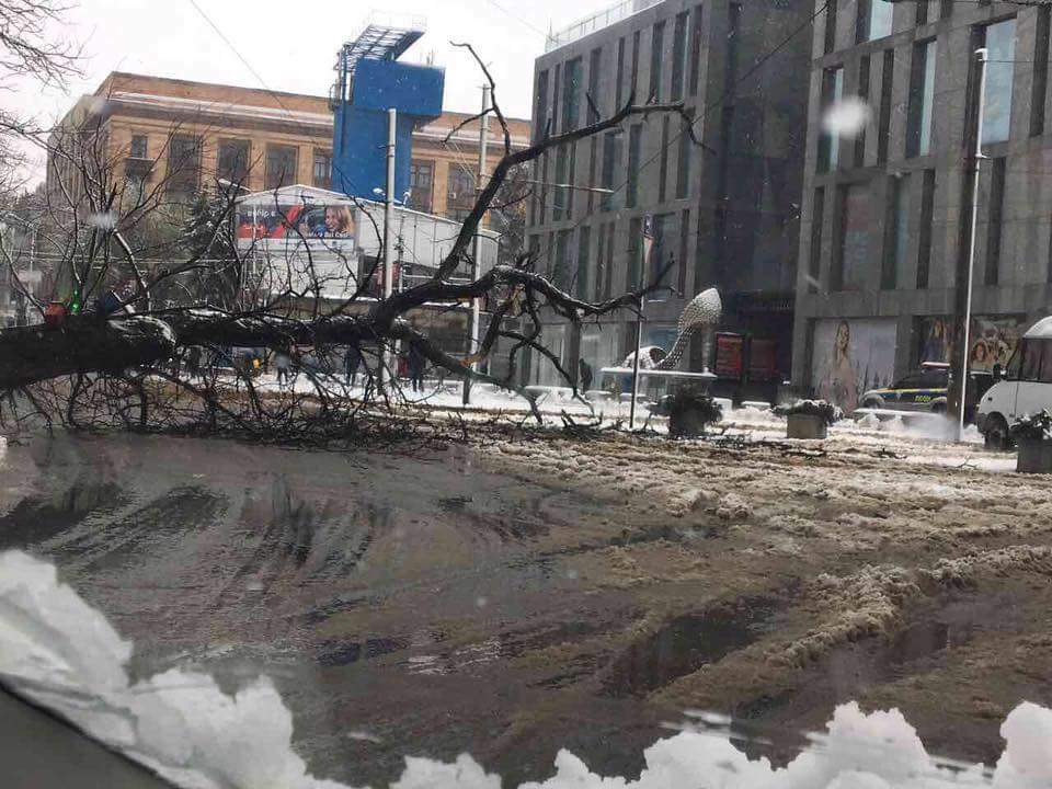 Fallen trees in central Dnipro