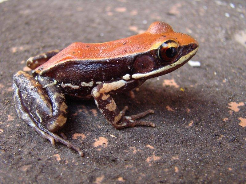 Thumbnail for Frog slime kills flu virus