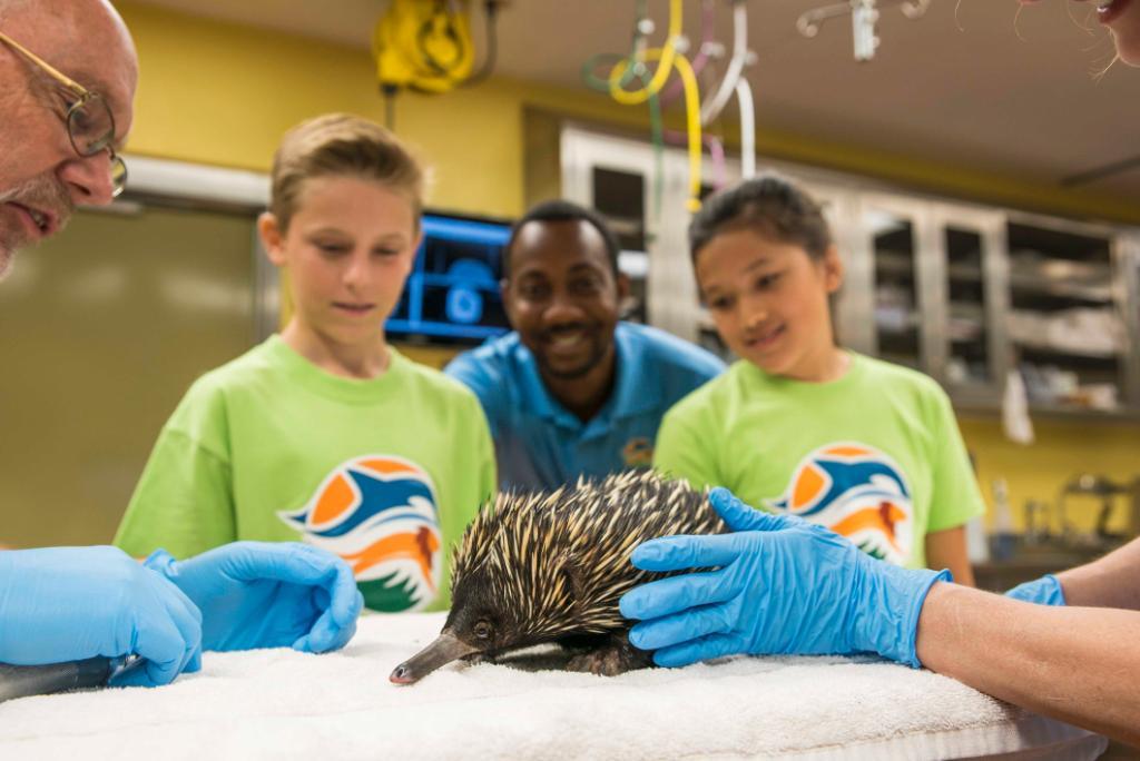 Busch Gardens Tampa BuschGardens Twitter