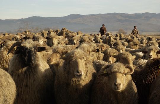 ルーマニアの羊飼いの映画もあるよ。   持続可能な社会など幻想だ。映像作品で地球環境の「今」を問う「第2回グリーンイメージ国際環境映画祭」 http://t.co/jPgtHvyR5s http://t.co/gIpLNCOIHR
