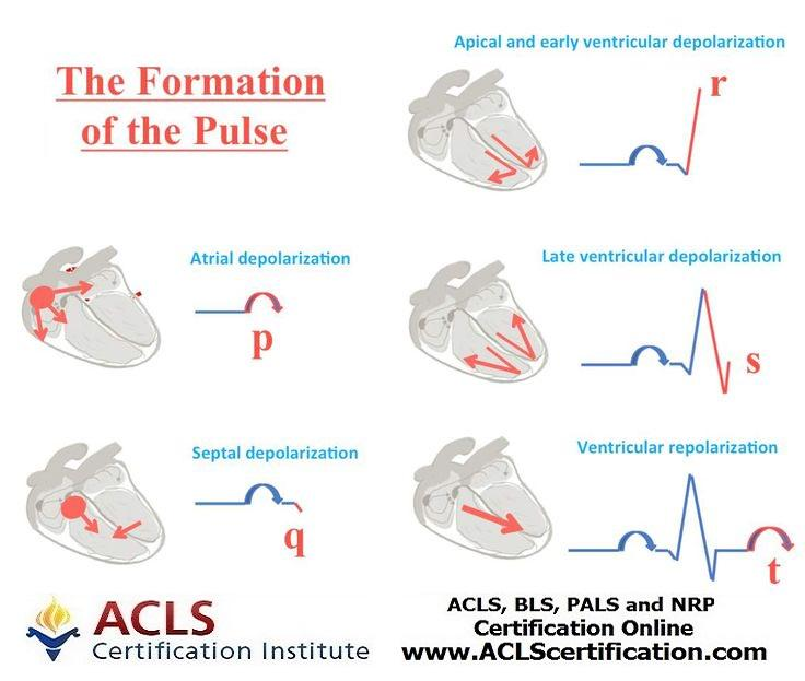 Acls Certification On Twitter Ecg Basics The Formation Of The