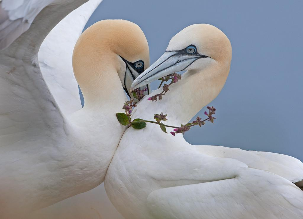 Stunning photo @wildlifeimages http://t.co/1kdCQxcVB3 Spring Love :-) #Rspb #Wildlife #Nature #Birds