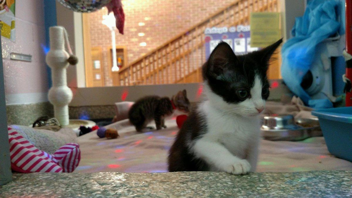 """AnimalPlanet on Twitter """"Join the Kitten Disco on Animal Planet"""