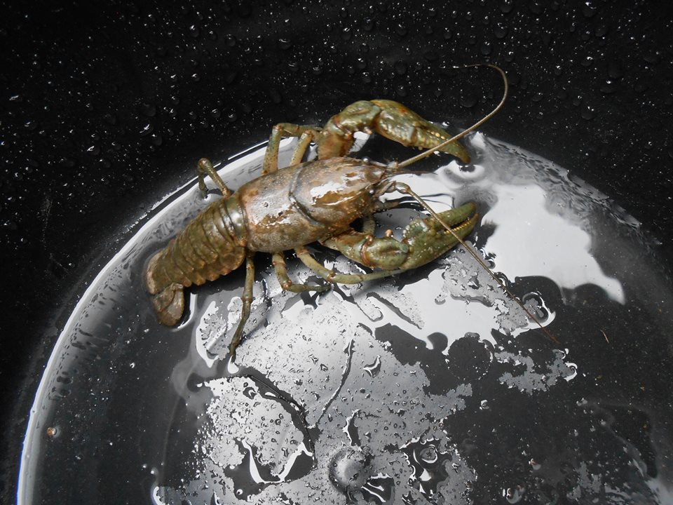 This is like The Dress, but with food. RT @nevesytrof: Lobster in a bucket or MIGHTY SPACE CRUSTACEAN? http://t.co/tvBdOBhskE