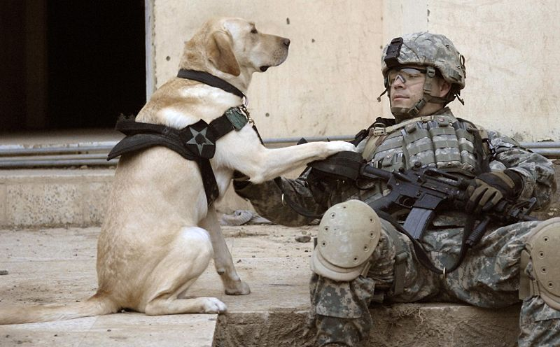 On this day in 1942, the US Army launched the K-9 Corps. http://t.co/yFheJqK4Y3