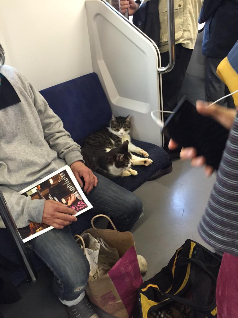 おい、そこ人間が一番座りたいとこやで。 pic.twitter.com/P7ePEfY1hR
