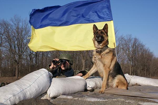 В Киеве будет создан новый кинологический центр, - МВД - Цензор.НЕТ 1393