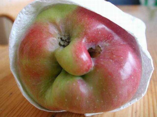 Ugly Apples   Yesterday, I returned to a man's garage, down …   Flickr