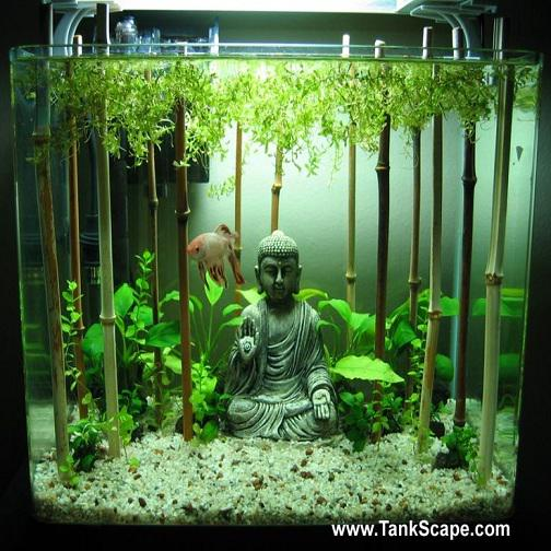 Betta fish center on twitter asian inspired aquarium for for Decoration zen aquarium