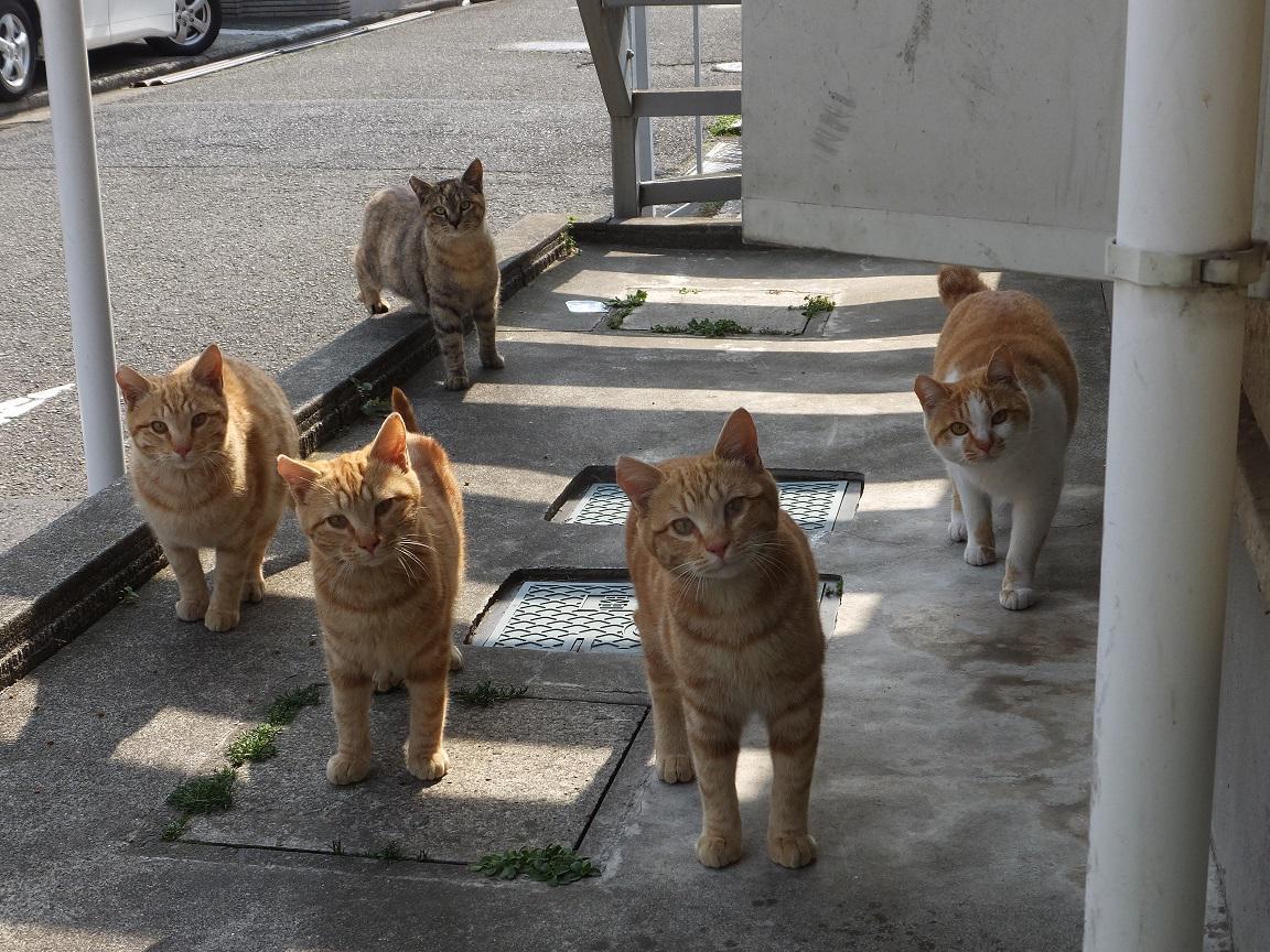 【恐るべき】朝、布団を干そうと扉を開けると、彼らがいたんです【監視社会】 http://t.co/HHIgd2eaRA