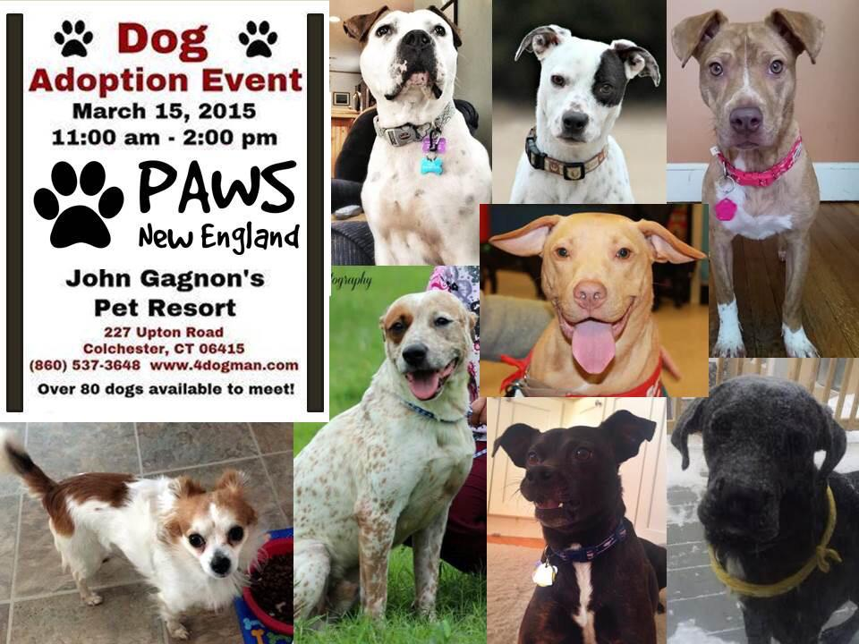 Paws New England On Twitter Cariana Is On Her Way To John Gagnons