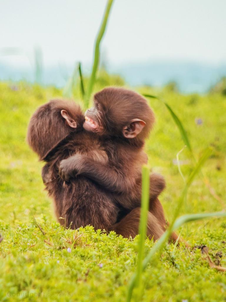 эффект дает животные которые обнимаются фото часто отправляются