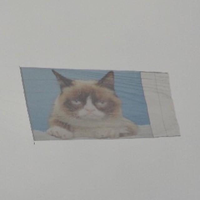 At #sxsw this year @realgrumpycat takes to the sky. http://t.co/Bk62ZV1Fkx http://t.co/k8Cxh3mui9