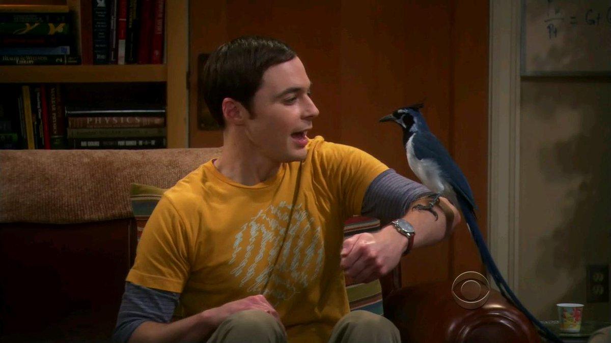 фото шелдона купера с птицей на руке поэтому они иногда
