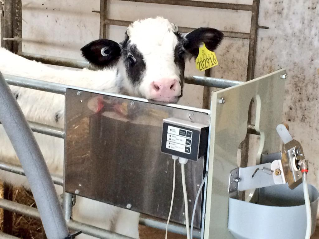 Delaval on twitter quot some happy calves a