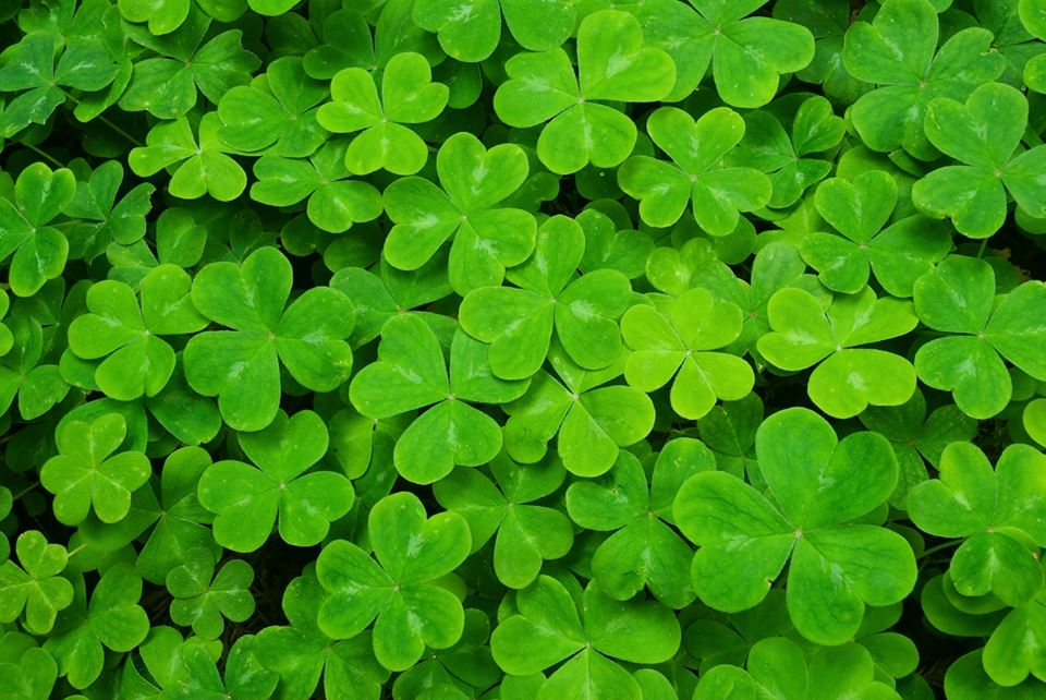 May your blessings outnumber the shamrocks that grow and may trouble avoid you wherever you go!  #StPatricksDay http://t.co/Iog1o30oJ6