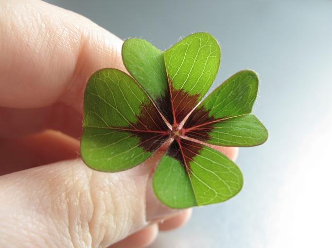 Mathematically speaking, there's a 1 in 10,000 chance of finding a lucky clover.  #StPatricksDay #NeverStopLearning http://t.co/CqDJHBVnVq