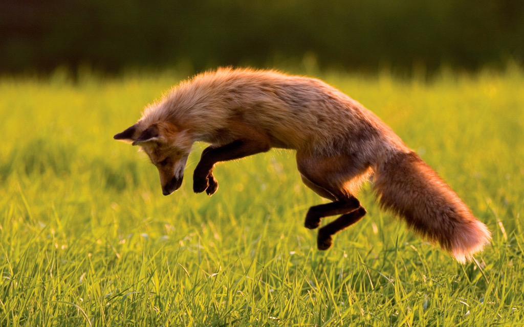 RT @RobynKTovey: @lemontwittor I think there were stingers #UrbanFox #KeithLemonSketchShow http://t.co/A2JTDYUxdd