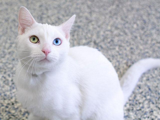 Such beautiful eyes.  RT @spcaLA: All about the eyes! Nick is available for adoption at spcaLA http://t.co/QHmOddJxUY http://t.co/xk6GsFnRwb