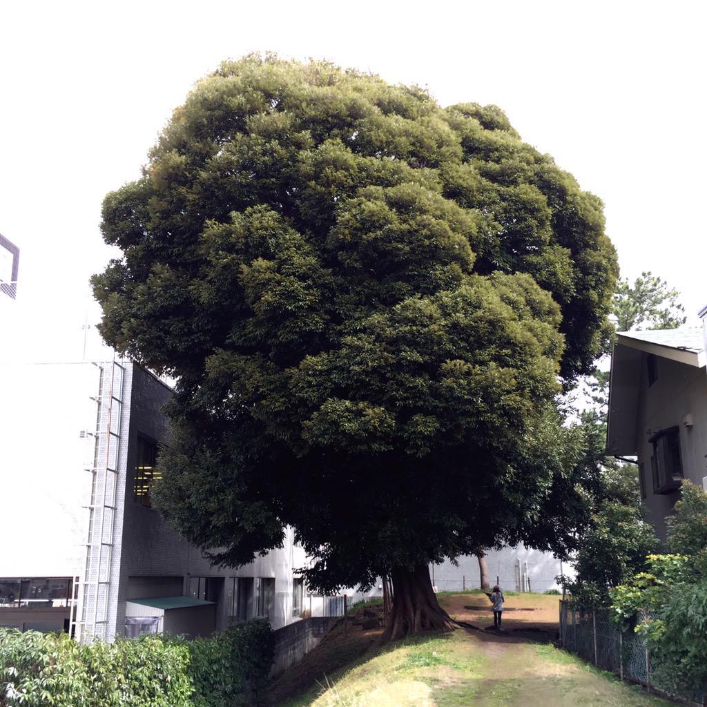 建物と住宅のあいだの綿アメであった。 http://t.co/ARs6knjUd1