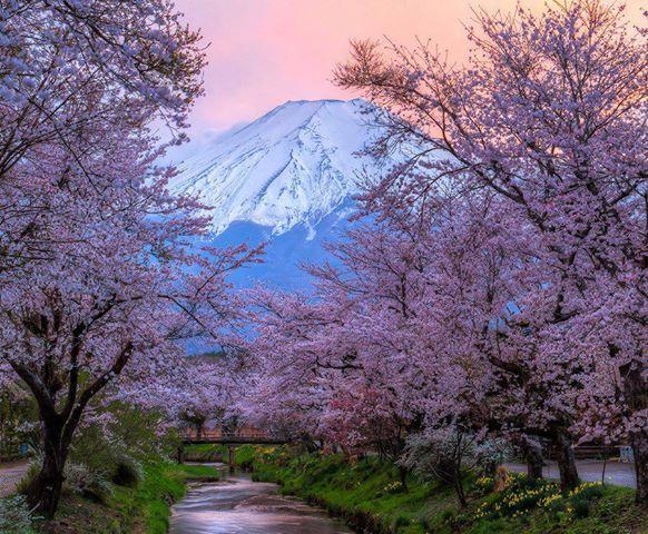 Wonderful landscape images of Mount Fuji #ArtPhoto #travel https://t.co/DYb99erGLP