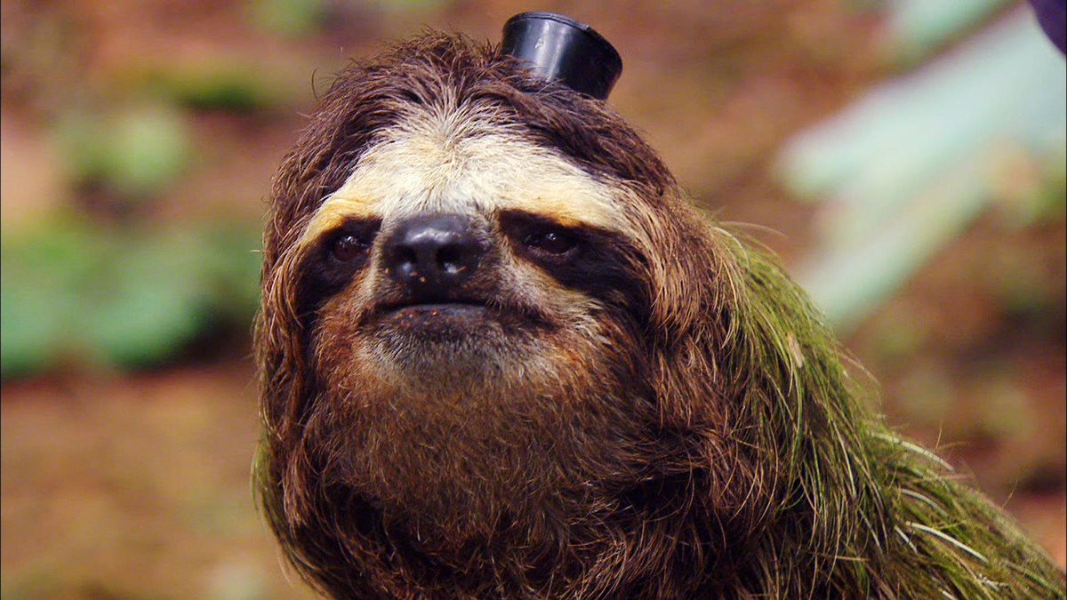 Sloth in party hat - photo#51