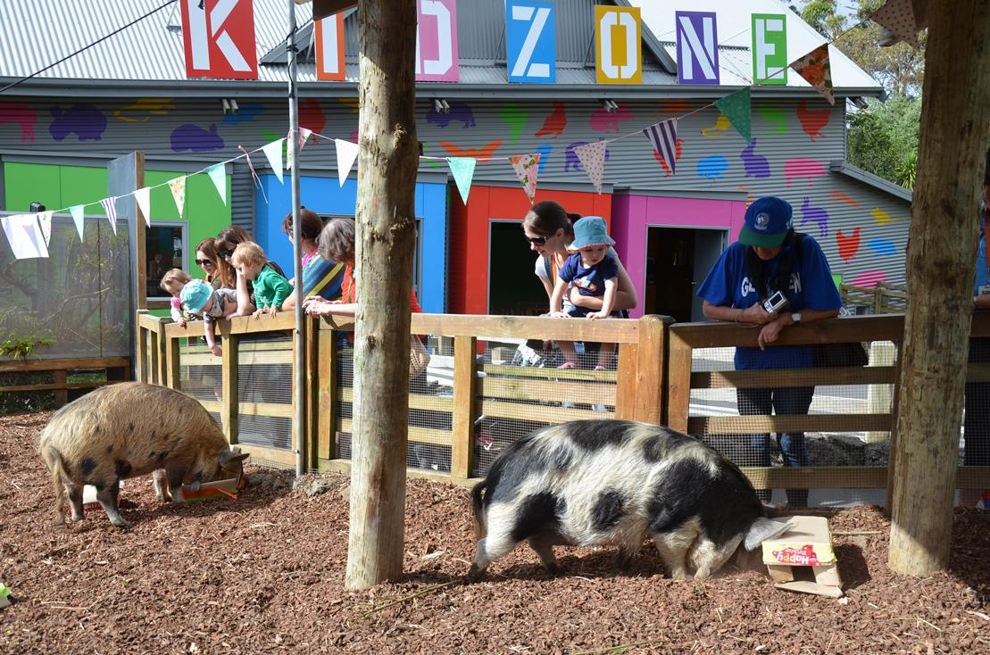 Auckland Zoo on Twitter We had a pig party yesterday celebrating