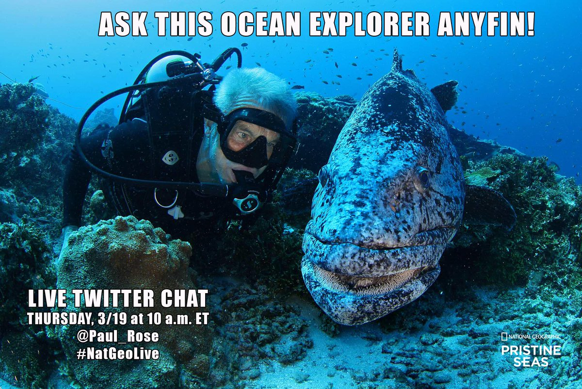Have questions about ocean conservation? Tweet @Paul_Rose using #NatGeoLive and join our chat at 10am EST tomorrow! http://t.co/IjviHvrHsM