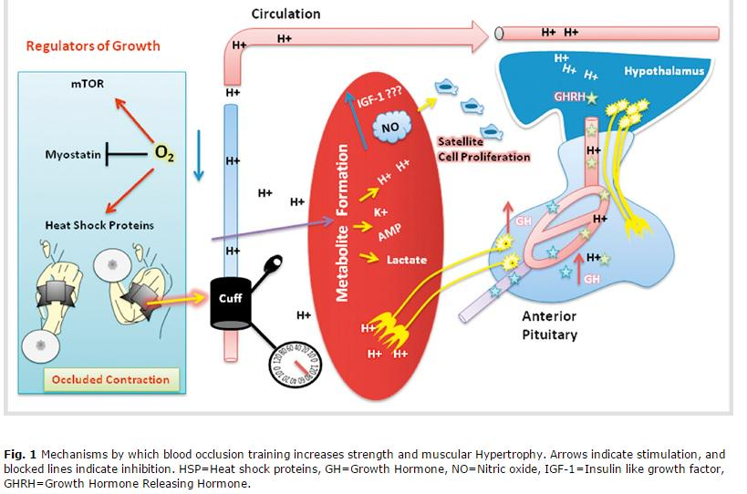 """Paul Head on Twitter: """"The physiology behind blood flow ..."""