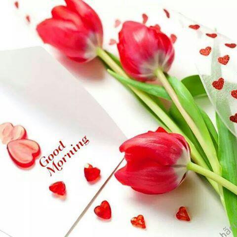 Ashish Lakhtariya On Twitter Good Morning Friendshave A Nice Day