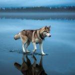 湖の上を歩いているみたい!犬と湖の氷と雨がもたらした偶然!