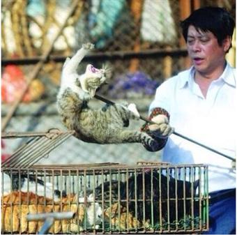 Корм для кошек  Отзывы покупателей