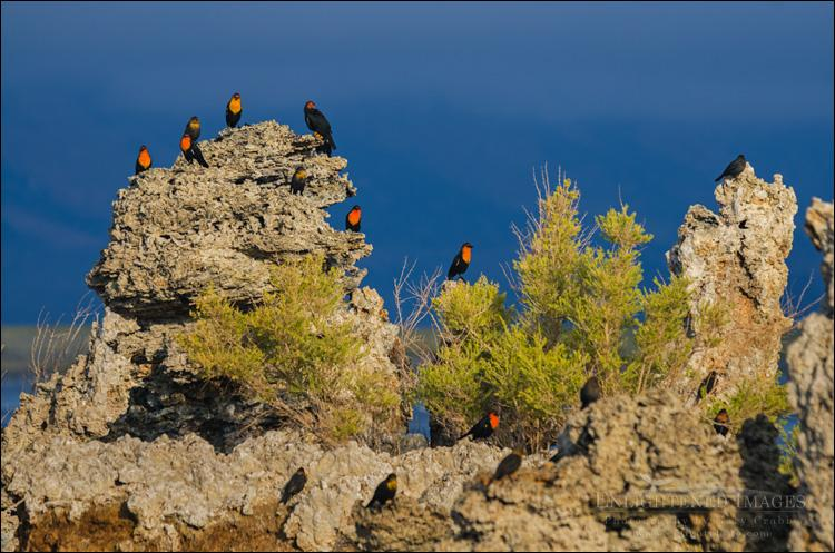 Calling any California Birders, I'm looking for species ID help on this image of these birds at Mono Lake. TIA. http://t.co/EiKcpu0EdJ