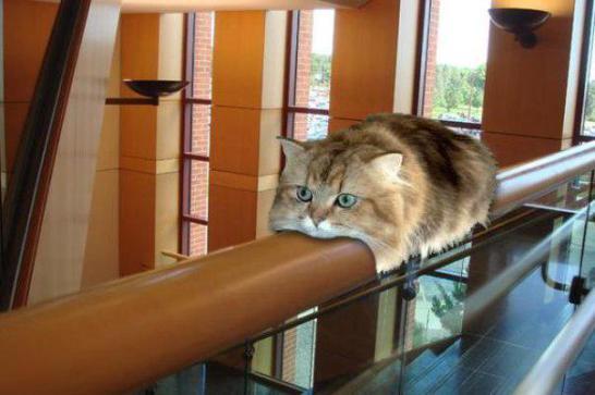 猫バスの進化形態「猫モノレール」happyeveryday.biz/?post_type=pos… pic.twitter.com/90AKJBIwQU