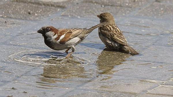 @aquilatierratve  No olvidéis que hoy es el #DiaMundialdelGorrion Una ciudad sin pájaros es una ciudad triste http://t.co/pNxRJXHBRc