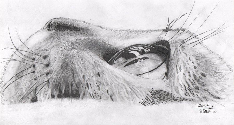 Dibujando On Twitter Gato Por Jezulini Del Pepino Httptco
