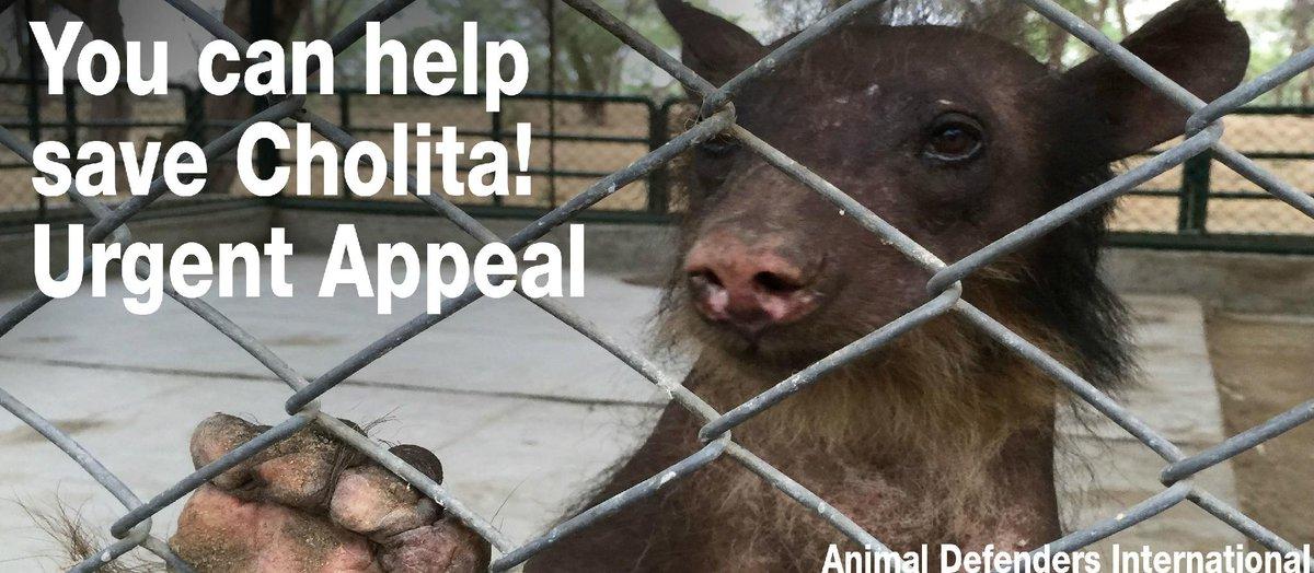 adi on twitter please retweet and help adi save cholita the bear